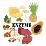 کاربرد آنزیم ترانس گلوتامیناز در ماست چیست؟